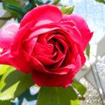 Von Guerilla Gardening bis Hobby-Gärtner: Die grüne Seite Münchens