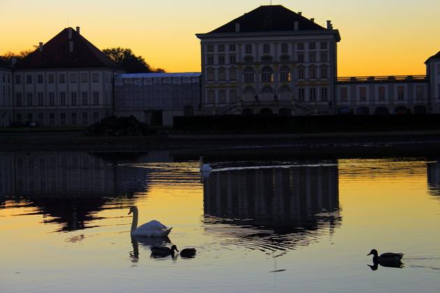 Schwäne am Nymphenburger Schloss