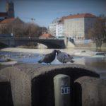 Wo kann man in München nette Singles kennenlernen?